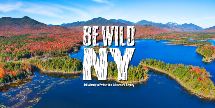Be Wild New York!